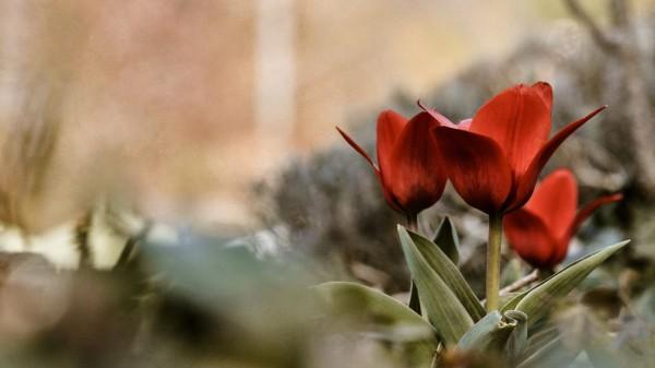Цветы фото