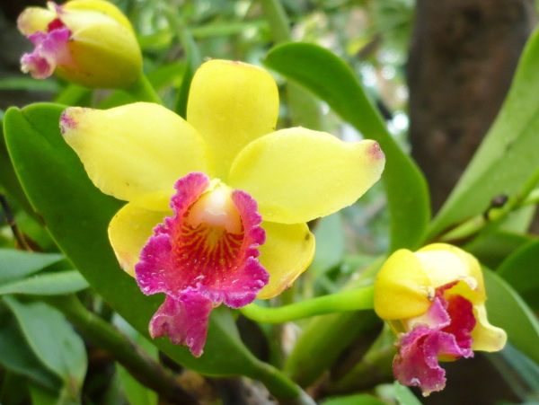 Caring-Orchids
