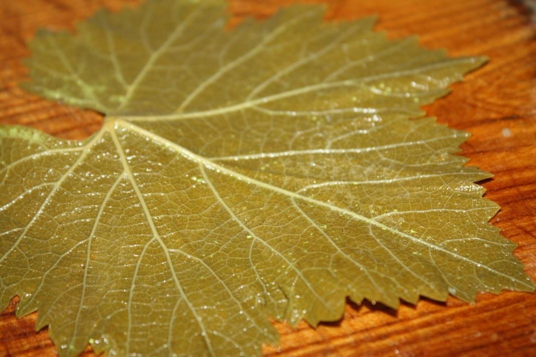 долма из виноградных листьев